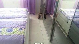 Смотреть Сиамская кошка против отражения