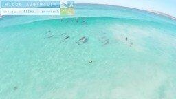 Смотреть Дельфины на волне удовольствия