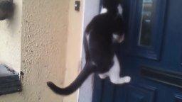 Смотреть Смешное про котов и кошек