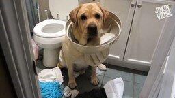 Смотреть Виноватые собаки