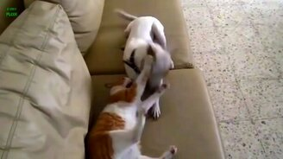 Дружные собаки и кошки смотреть видео прикол - 1:19