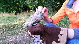 Смотреть Нежные почесухи совы