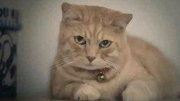 Смотреть Китайский кот в поисках лекарства