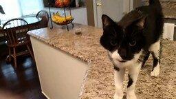 Котик мяукает басом смотреть видео прикол - 0:53