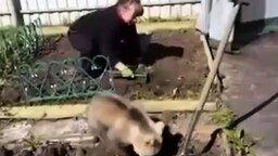Смотреть Медвежонок помогает сажать картошку