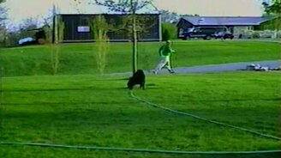 Пёс поливает хозяина из шланга смотреть видео прикол - 0:30