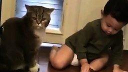 Навязчивый человеческий детёныш и кот смотреть видео прикол - 0:36