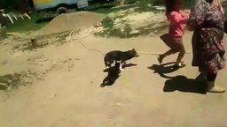 Смотреть Кошки атакуют собаку