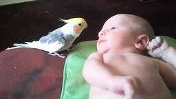 Попугаичья песня для малыша смотреть видео прикол - 1:04