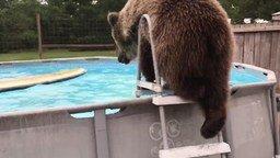 Смотреть Мишка отдыхает в бассейне