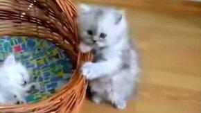 Смешные и миленькие котятки смотреть видео прикол - 2:06