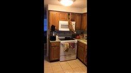 Смотреть Кот охотится за вкуснятиной