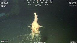 Смотреть Необычное существо на огромной глубине