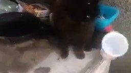 Смотреть Две кошки и один стаканчик