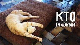 Кто главный в доме, где живёт кот? смотреть видео прикол - 1:07