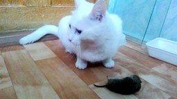 Смотреть Кошка-добытчица