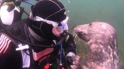 Смотреть Милый подводный пёсик