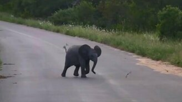 Беззаботный слонёнок смотреть видео прикол - 0:58