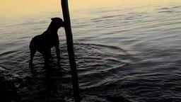 Смотреть Собака первый раз на речке