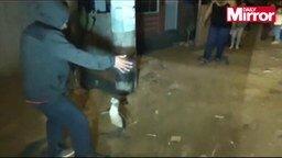Смотреть Полицейские гоняются за пингвином
