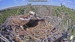 Смотреть Ветер застал птицу врасплох