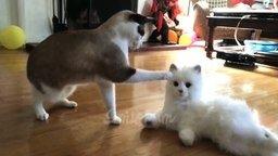 Весёлости про котов и кошек смотреть видео прикол - 5:20