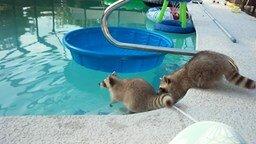 Смотреть Вылезай из этого мерзкого бассейна!