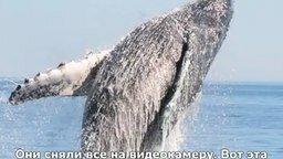 Смотреть Как люди кита спасли