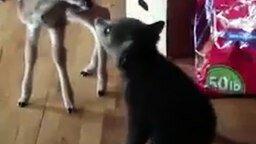 Смотреть Медвежонок знакомится с оленёнком
