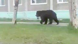 Прогулка медведя по городу