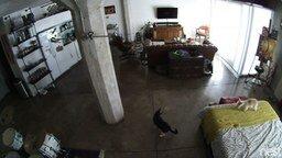 Смотреть Кот укрощает собаку