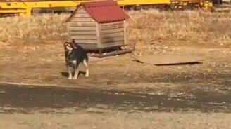 Смотреть Собака хочет взлететь