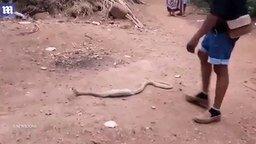 Змея проглотила бутылку