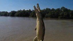 Смотреть Как высоко могут прыгать крокодилы