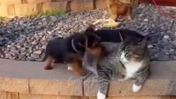 Смотреть Чудные и смешные до слёз коты и кошки