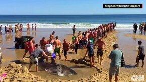 Как люди спасли акулу