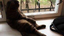 Смотреть Осенняя кошачья тоска