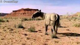 Десятка зверей-гигантов, живших на Земле смотреть видео - 4:25