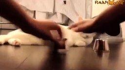 Смотреть Веселящие коты и кошки