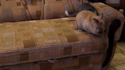Смотреть Котёнок атакует кролика