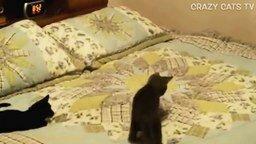 Смотреть Кошки резвятся на кровати