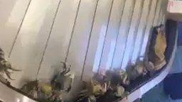 Смотреть Побег крабов из багажа