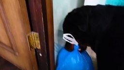 Смотреть Пёс выносит мусор
