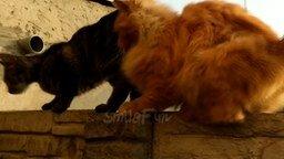 Смотреть Весёлые ролики с кошками и котами