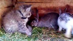 Смотреть Котёнок против кроликов