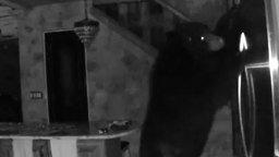 Смотреть Медведь зашёл в гости на кухню...