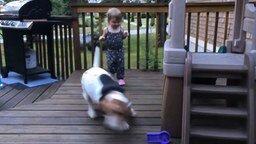 Пёс заигрывает с девочкой