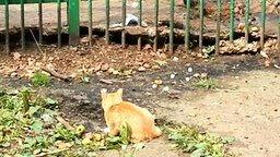 Кот атакует наглую крысу