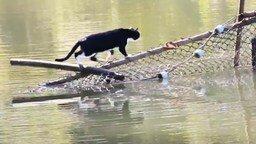 Кот переходит реку смотреть видео прикол - 1:44