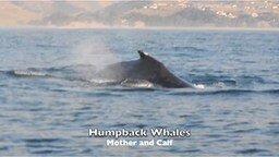 Смотреть Огромный кит плещется в воде